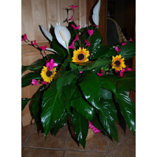 Peace Lily Plant With added flowers